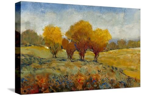 Vivid Brushstrokes I-Tim O'toole-Stretched Canvas Print