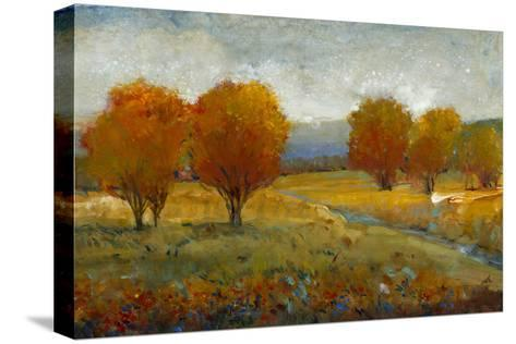 Vivid Brushstrokes II-Tim O'toole-Stretched Canvas Print