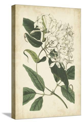 Botanical Display II-Vision Studio-Stretched Canvas Print