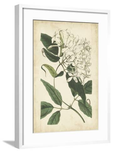 Botanical Display II-Vision Studio-Framed Art Print
