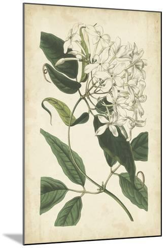 Botanical Display II-Vision Studio-Mounted Art Print