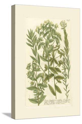 Garden Varietals V-Johann Wilhelm Weinmann-Stretched Canvas Print