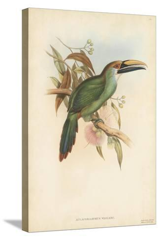 Tropical Toucans I-John Gould-Stretched Canvas Print