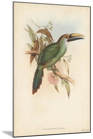 Tropical Toucans I-John Gould-Mounted Art Print