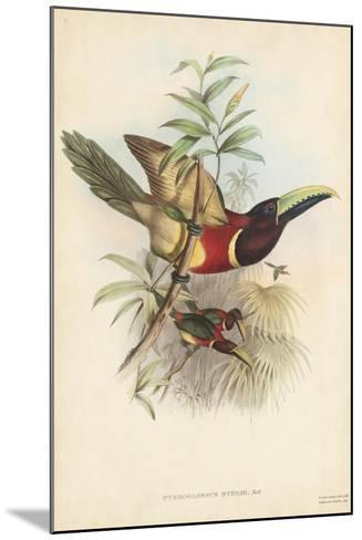 Tropical Toucans III-John Gould-Mounted Art Print