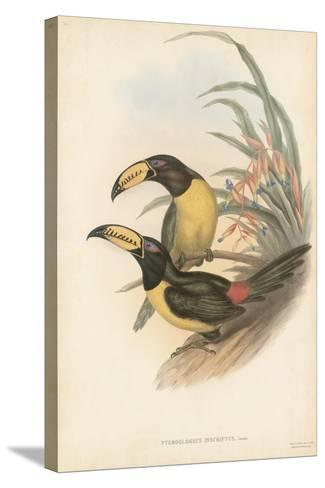 Tropical Toucans IV-John Gould-Stretched Canvas Print