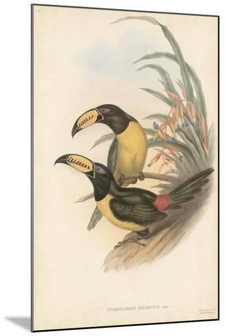 Tropical Toucans IV-John Gould-Mounted Art Print