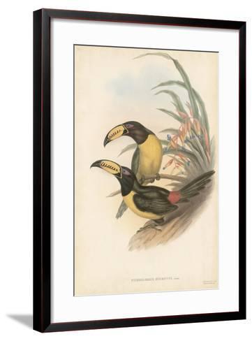 Tropical Toucans IV-John Gould-Framed Art Print
