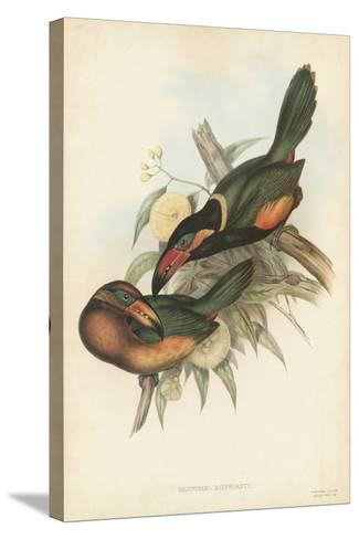 Tropical Toucans V-John Gould-Stretched Canvas Print