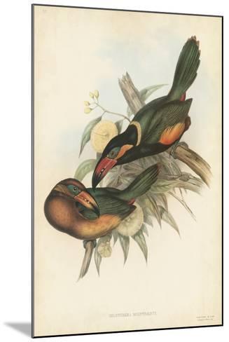 Tropical Toucans V-John Gould-Mounted Art Print