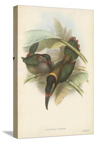 Tropical Toucans VI-John Gould-Stretched Canvas Print