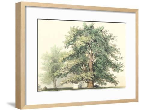Majestic Oak--Framed Art Print