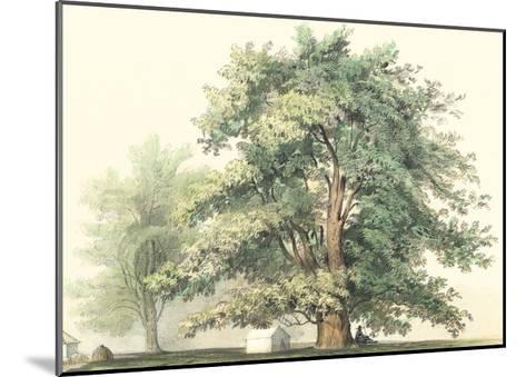 Majestic Oak--Mounted Art Print
