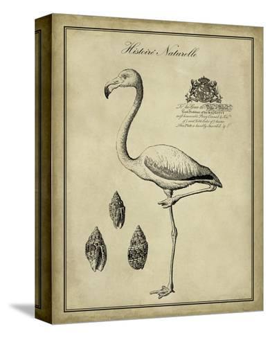 Antiquarian Flamingo-Vision Studio-Stretched Canvas Print