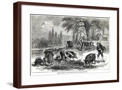 Illustration of Pigs Truffle Hunting--Framed Art Print
