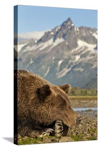 Brown Bear and Coastal Mountains, Katmai National Park, Alaska-Paul Souders-Stretched Canvas Print