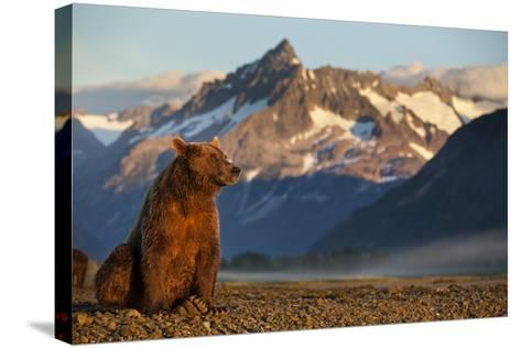 Brown Bear at Dawn, Katmai National Park, Alaska-Paul Souders-Stretched Canvas Print