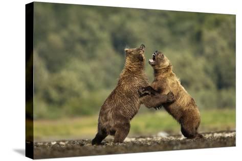 Grizzly Bear, Katmai National Park, Alaska-Paul Souders-Stretched Canvas Print