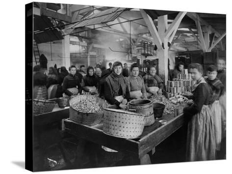 Women Canning Oysters--Stretched Canvas Print