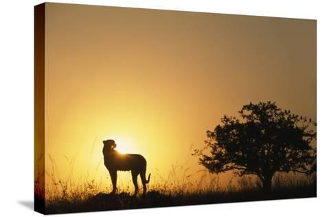 Silhouette of Cheetah and Tree-Paul Souders-Stretched Canvas Print