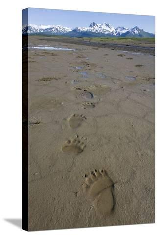 Brown Bear Tracks at Hallo Bay in Katmai National Park-Paul Souders-Stretched Canvas Print