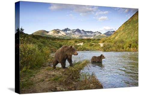 Two Year Old Grizzly Bears on Riverbank at Kinak Bay-Paul Souders-Stretched Canvas Print