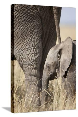 Elephant Calf Beside Adult in Masai Mara National Reserve-Paul Souders-Stretched Canvas Print