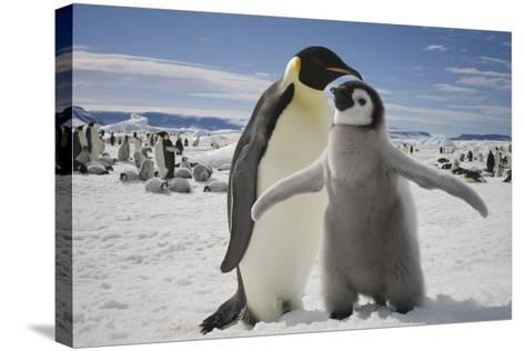 Emperor Penguin and Chick in Antarctica-Paul Souders-Stretched Canvas Print