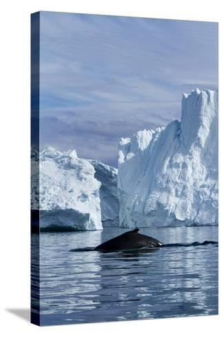 Humpback Whale in Disko Bay in Greenland-Paul Souders-Stretched Canvas Print