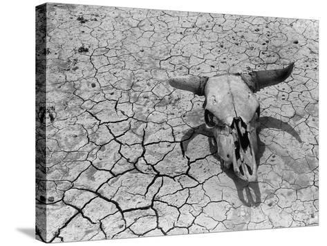 Cattle Skull on the Parched Earth-Arthur Rothstein-Stretched Canvas Print