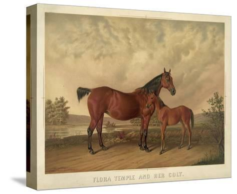 Flora Temple and Her Colt--Stretched Canvas Print