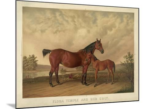 Flora Temple and Her Colt--Mounted Giclee Print