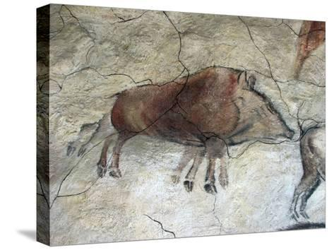 Replica of Cave Painting of Boar from Altamira Cave--Stretched Canvas Print