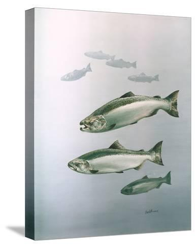 King Salmon--Stretched Canvas Print