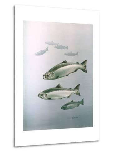 King Salmon--Metal Print