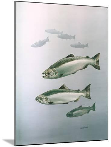 King Salmon--Mounted Giclee Print