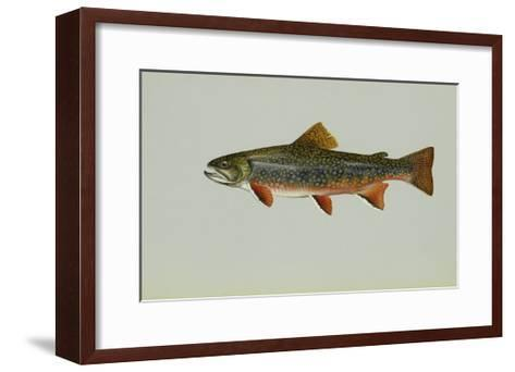 Brook Trout--Framed Art Print