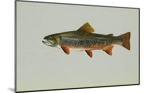 Brook Trout--Mounted Giclee Print