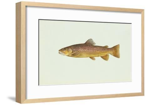 Brown Trout--Framed Art Print