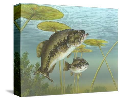 Largemouth Bass--Stretched Canvas Print