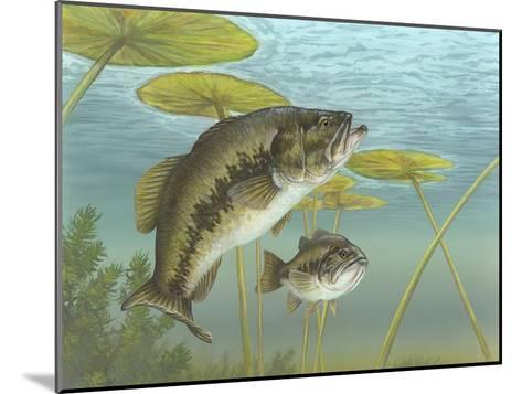 Largemouth Bass--Mounted Giclee Print