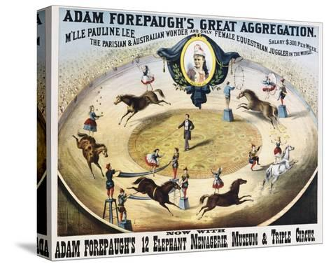 Adam Forepaugh's Great Aggregation Poster--Stretched Canvas Print