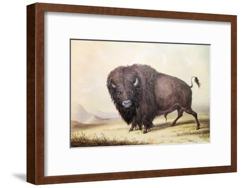 Bull Buffalo-George Catlin-Framed Art Print