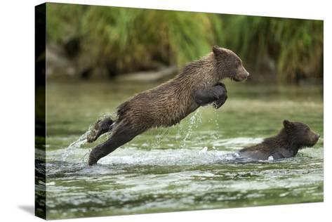 Brown Bear Cub, Katmai National Park, Alaska-Paul Souders-Stretched Canvas Print