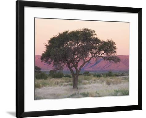 Camelthorn Tree Against Sandstone Mountains Lit by the Last Rays of Light from the Setting Sun-Lee Frost-Framed Art Print