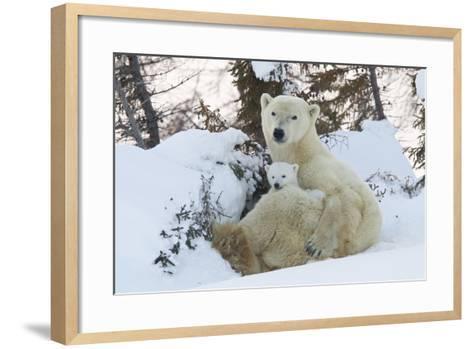 Polar Bear (Ursus Maritimus) and Cubs-David Jenkins-Framed Art Print