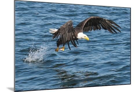 Bald Eagle (Haliaeetus Leucocephalus) Near Prince Rupert, British Columbia, Canada, North America-Michael DeFreitas-Mounted Photographic Print