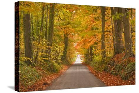 Autumn Colours in the Beech Trees on the Road to Turkdean in the Cotwolds-Julian Elliott-Stretched Canvas Print