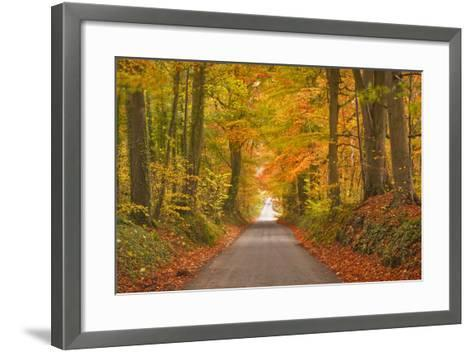 Autumn Colours in the Beech Trees on the Road to Turkdean in the Cotwolds-Julian Elliott-Framed Art Print