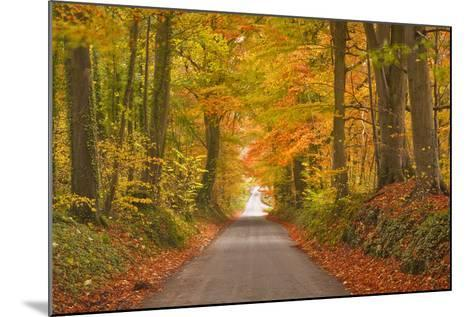Autumn Colours in the Beech Trees on the Road to Turkdean in the Cotwolds-Julian Elliott-Mounted Photographic Print